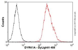 Flow Cytometry - Anti-DYRK1A antibody (ab54944)