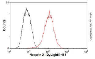 Flow Cytometry-Anti-Nesprin 2 antibody(ab57397)