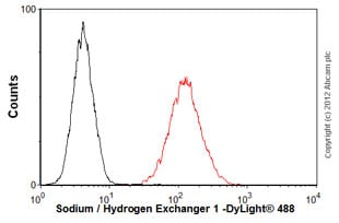 Flow Cytometry - Anti-Sodium / Hydrogen Exchanger 1 antibody (ab58304)