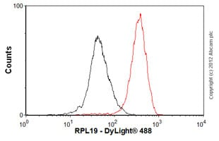 Flow Cytometry-Anti-RPL19 antibody(ab58328)