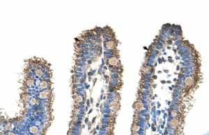 Immunohistochemistry (Formalin/PFA-fixed paraffin-embedded sections)-Anti-RHOBTB1 antibody(ab59123)