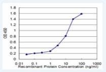 ELISA - RPL36A antibody (ab77733)