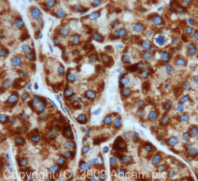 Immunohistochemistry (Formalin/PFA-fixed paraffin-embedded sections) - RPS3 antibody (ab77772)