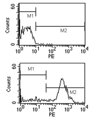 Flow Cytometry - Rat monoclonal [SB84a]  Secondary Antibody to Mouse IgG2a - gamma chain (PE) (ab79101)