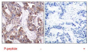 Immunohistochemistry (Formalin/PFA-fixed paraffin-embedded sections) - Anti-Caspase-9 (phospho Y153) antibody (ab79202)