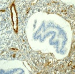 Immunohistochemistry (Formalin/PFA-fixed paraffin-embedded sections) - Anti-Caveolin-2 [EPR2220] antibody (ab79397)