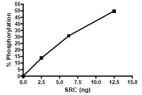 Functional Studies - Src protein (Active) (ab79634)