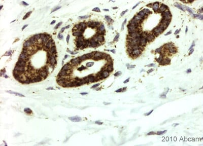 Immunohistochemistry (Formalin/PFA-fixed paraffin-embedded sections) - Histone H2A.Z antibody [4A4] (ab80150)