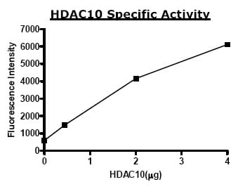 Functional Studies - HDAC10 protein (Active) (ab80283)