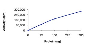 Functional Studies - Ret protein (Active) (ab84791)