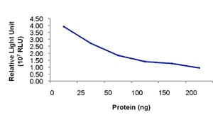 Functional Studies - Pik3ca + PIK3R1 protein (Active) (ab85833)