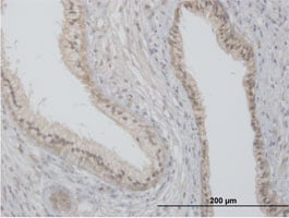 Immunohistochemistry (Formalin/PFA-fixed paraffin-embedded sections) - Flotillin 2 antibody (ab88498)