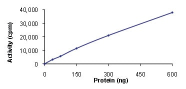 Functional Studies - STK33 protein (Active) (ab89591)