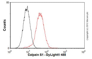 Flow Cytometry-Anti-Calpain S1 antibody [EPR3324](ab92333)