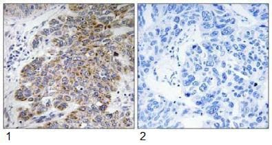 Immunohistochemistry (Formalin/PFA-fixed paraffin-embedded sections) - CHST10 antibody (ab92648)