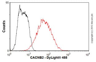 Flow Cytometry - Anti-CACNB2 antibody [S8b-1] (ab93606)