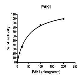 Functional Studies - PAK1 protein (Active) (ab95253)