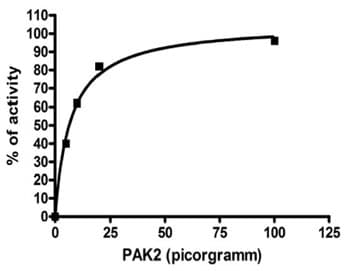 Functional Studies - PAK2 protein (Active) (ab95310)