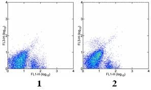 Flow Cytometry - c-Kit antibody [2B8] (PE/Cy7 ®) (ab95676)