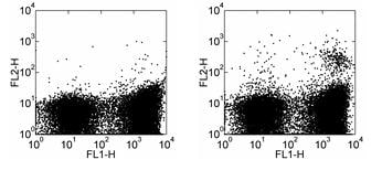 Flow Cytometry - Dendritic cells antibody [33D1] (Phycoerythrin) (ab95767)