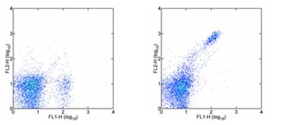 Flow Cytometry - CD8 beta antibody [H35-17.2] (Phycoerythrin) (ab95772)