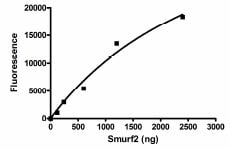 Functional Studies - SMURF 2 protein (Active) (ab95930)