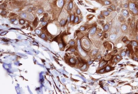 Immunohistochemistry (Formalin/PFA-fixed paraffin-embedded sections) - VPS16 antibody (ab96033)