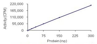 Functional Studies - DDR2 protein (Active) (ab96401)