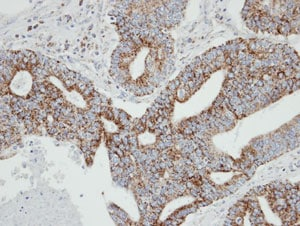 Immunohistochemistry (Formalin/PFA-fixed paraffin-embedded sections) - Rab2 antibody (ab96509)