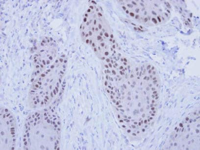 Immunohistochemistry (Formalin/PFA-fixed paraffin-embedded sections) - RFC4 antibody (ab96852)