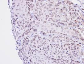 Immunohistochemistry (Formalin/PFA-fixed paraffin-embedded sections) - Lamin B2 antibody (ab97513)