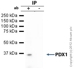 Immunoprecipitation - Anti-PDX1 antibody (ab98298)