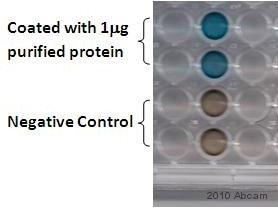 ELISA - Anti-Alkaline Phosphatase  antibody (ab354)