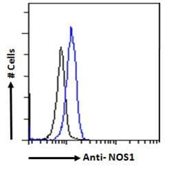 Flow Cytometry - Anti-nNOS (neuronal) antibody (ab1376)