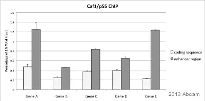 ChIP - Anti-p55/DCAF1 antibody - ChIP Grade (ab1766)