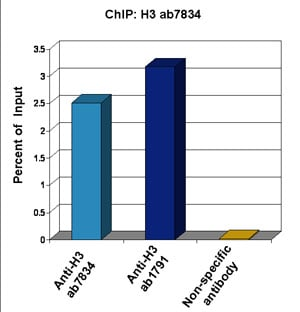 ChIP - Anti-Histone H3 antibody - Nuclear Loading Control and ChIP Grade (ab1791)