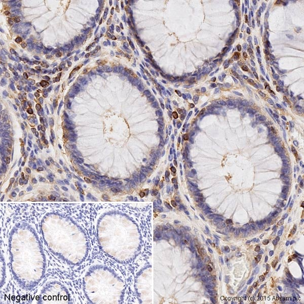 Immunohistochemistry (Formalin/PFA-fixed paraffin-embedded sections) - Anti-Actin antibody - Loading Control (ab1801)