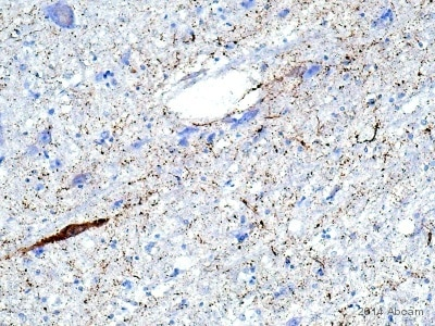 Immunohistochemistry (Formalin/PFA-fixed paraffin-embedded sections) - Anti-Substance P antibody (ab10353)