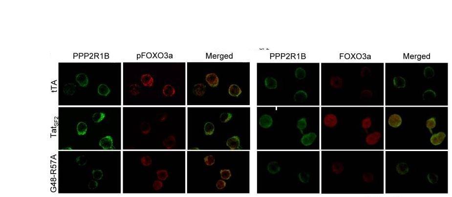 Fluorescence Microscopy - PE/Cy5® Conjugation Kit- Lightning-Link® (ab102893)