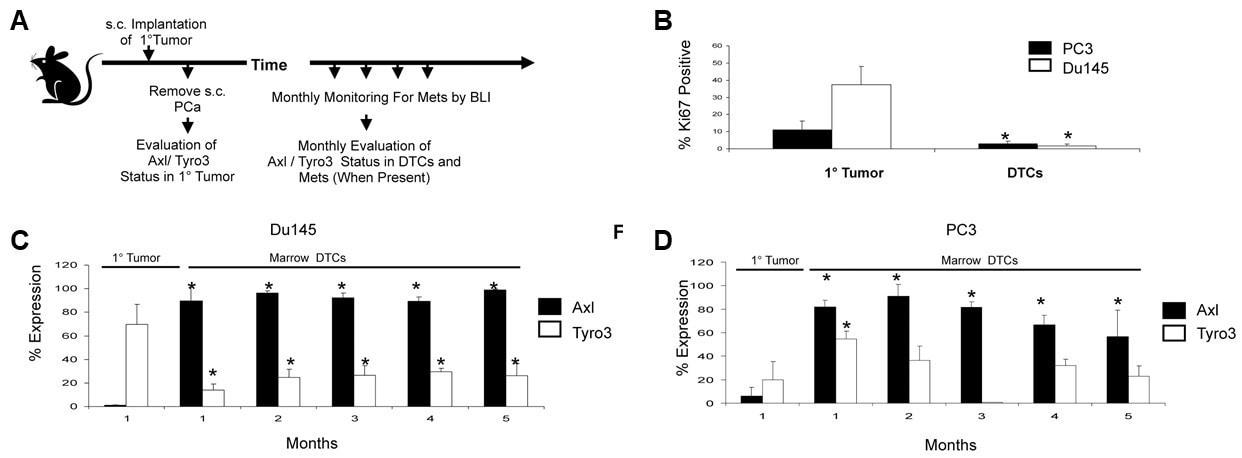 Flow Cytometry - PE/Cy5® Conjugation Kit- Lightning-Link® (ab102893)