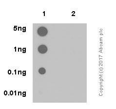 Dot Blot - Anti-mTOR (phospho S2448) antibody [EPR426(2)] (ab109268)