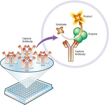 Functional Studies - Complex II Enzyme Activity Microplate Assay Kit (ab109908)