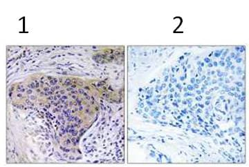 Immunohistochemistry (Formalin/PFA-fixed paraffin-embedded sections) - Anti-SLC30A2 antibody (ab111114)