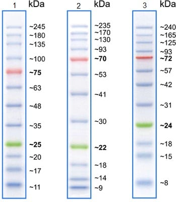 SDS-PAGE - Prestained Protein Ladder – Broad molecular weight (10-245 kDa) (ab116028)