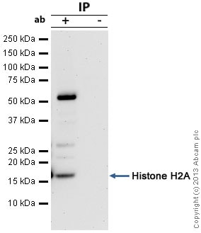 Immunoprecipitation - Anti-Histone H2A antibody (ab116677)