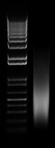 Chromatin Extraction Kit (ab117152)