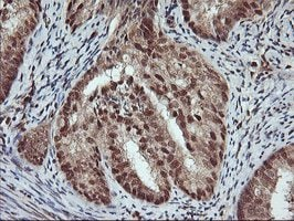Immunohistochemistry (Formalin/PFA-fixed paraffin-embedded sections) - Anti-XLF antibody [OTI1F3] (ab119375)