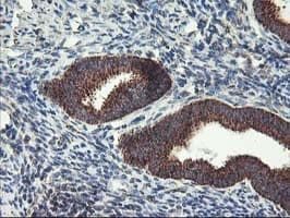 Immunohistochemistry (Formalin/PFA-fixed paraffin-embedded sections) - Anti-Hsp75 antibody [OTI1A1] (ab119398)