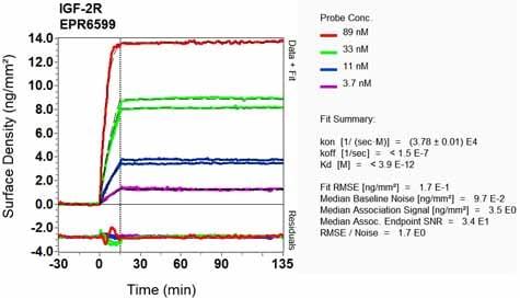 OI-RD Scanning - Anti-M6PR (cation independent) antibody [EPR6599] (ab124767)
