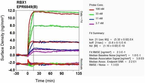 Other - Anti-ROC1 antibody [EPR6849(B)] (ab124950)